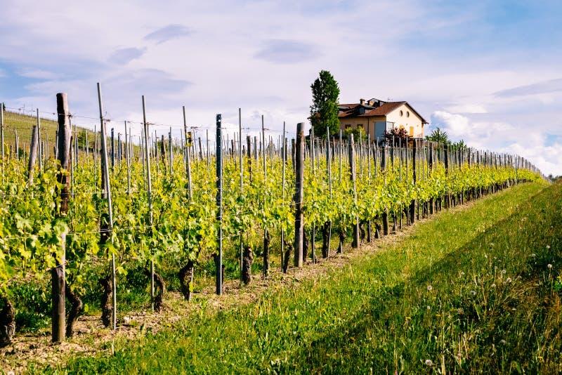 Langhe och Roero vingårdar V?r Vinodling n?ra Barolo, Piedmont, Italien, Unesco-arv Dolcetto Barbaresco arkivbild