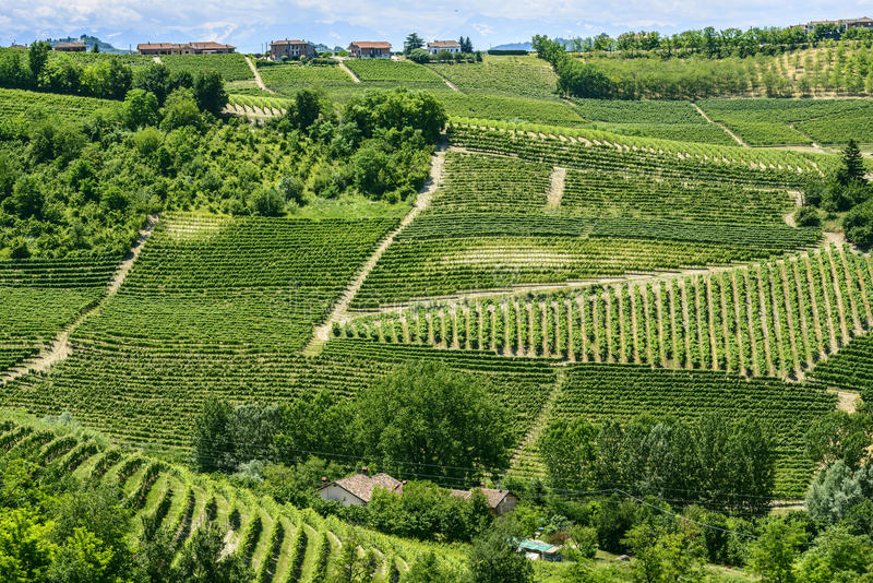 Download Langhe, vineyards stock photo. Image of nobody, cuneo - 33214372