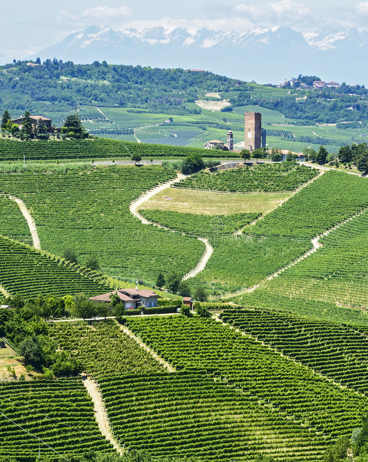 Download Langhe, Vineyards Royalty Free Stock Image - Image: 33457376