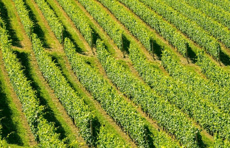 Download Langhe, vineyards stock image. Image of summer, nobody - 34168821