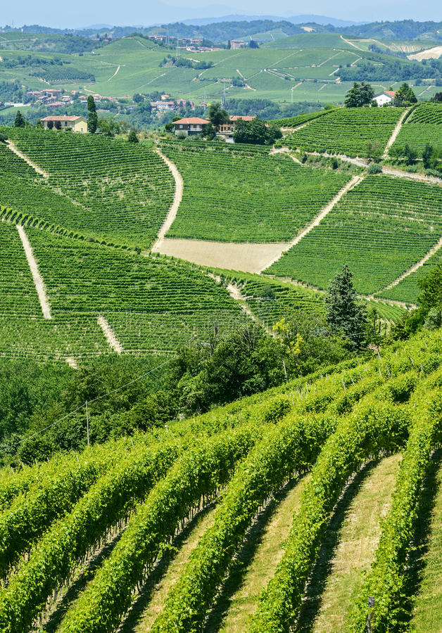 Download Langhe, vineyards stock photo. Image of cuneo, summer - 34391748