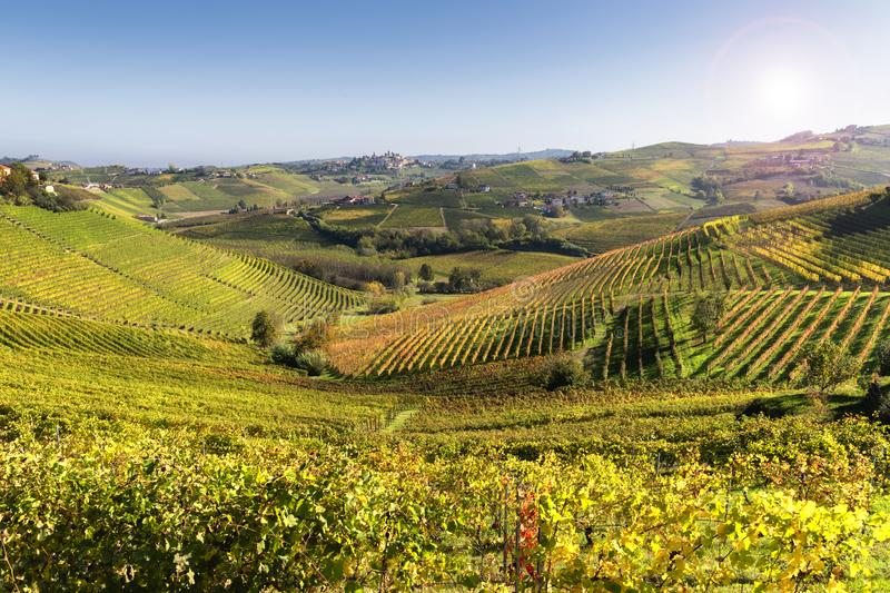 Langhe vineyards of Barbaresco in autumn, Piedmont, Italy stock photos