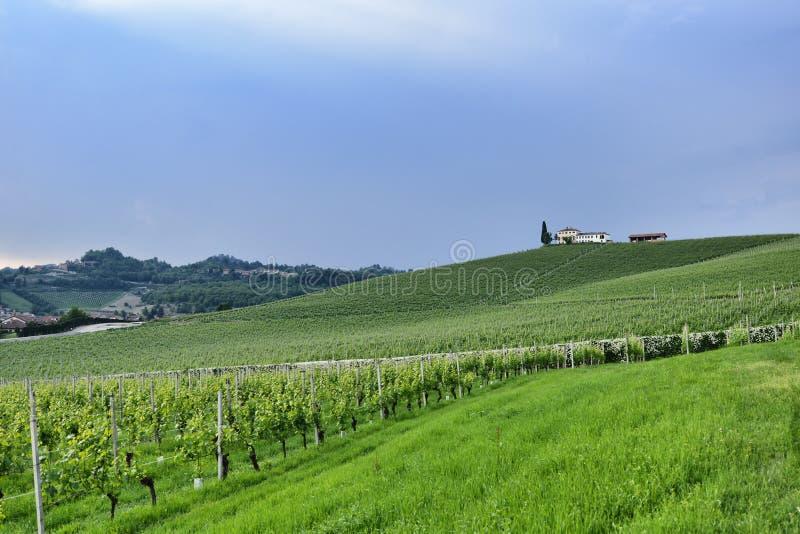 Langhe winnica w Podgórskim Włochy około Maj 2018 obraz stock