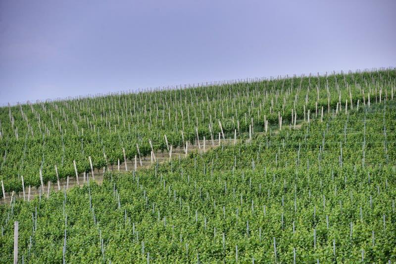 Langhe winnica w Podgórskim Włochy około Maj 2018 zdjęcia royalty free