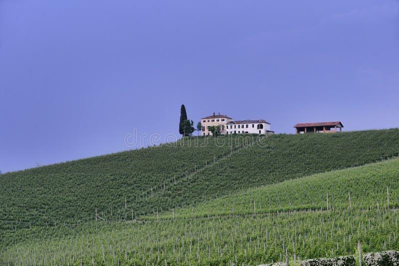 Langhe winnica w Podgórskim Włochy około Maj 2018 zdjęcie stock