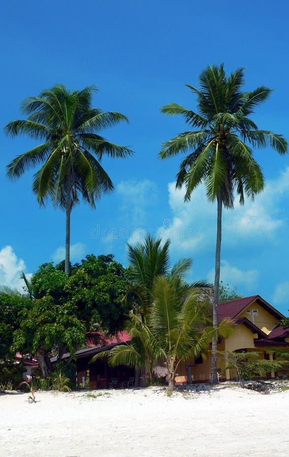Langkawi Island. Tall Twin Palms royalty free stock image
