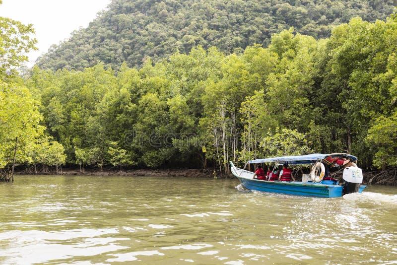 Langkawi, Maleisië, 12 December 2017: Riviercruise die de Mangroveboom tonen stock afbeeldingen