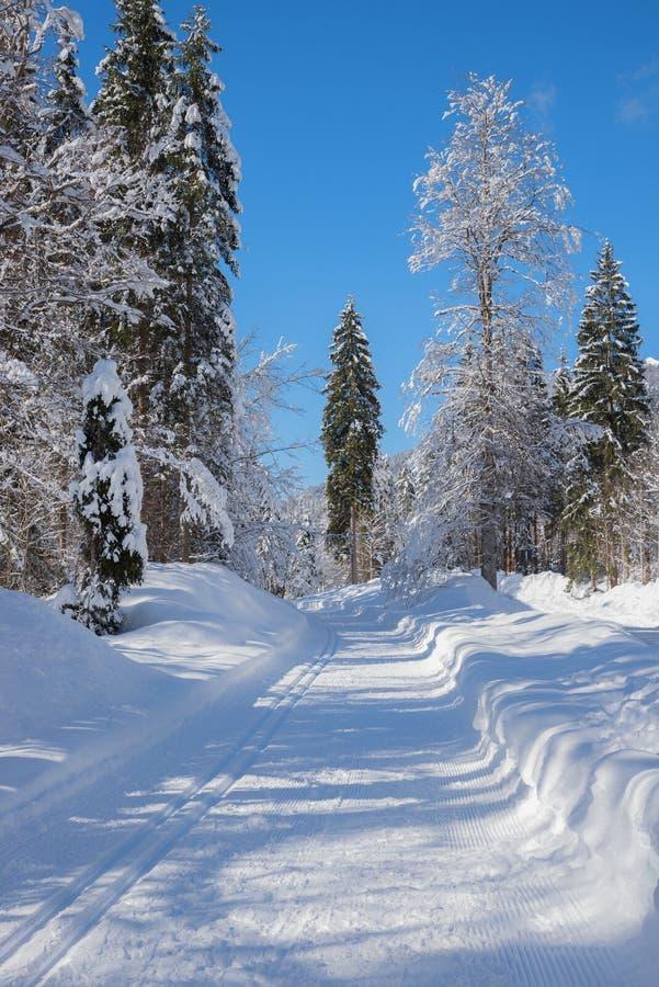 Langlauf轨道和小径在多雪的冬天森林上部bavari 免版税库存照片