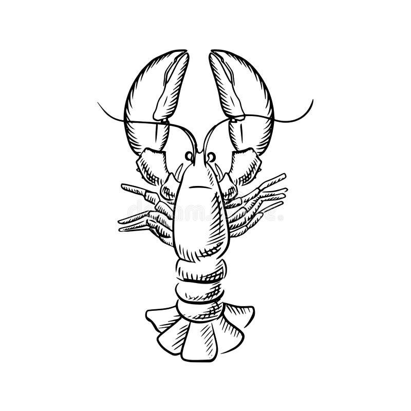 Langosta atlántica grande con las garras aumentadas stock de ilustración