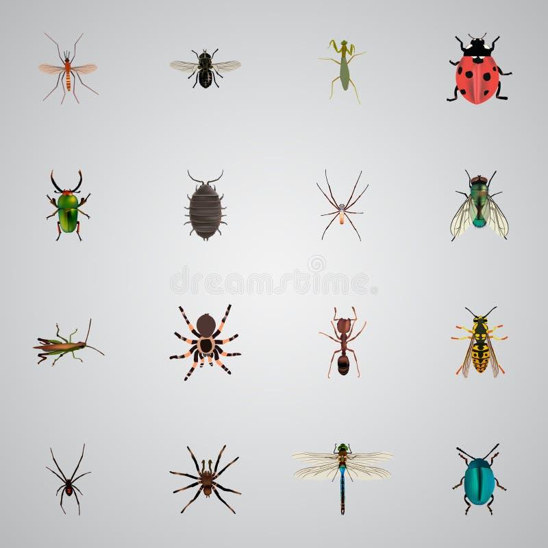 Langosta realista, mosca doméstica, mosquito y otros elementos del vector El sistema de símbolos realistas del insecto también in ilustración del vector