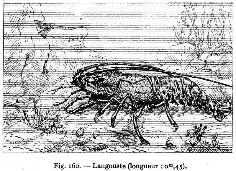 Langouste Free Public Domain Cc0 Image