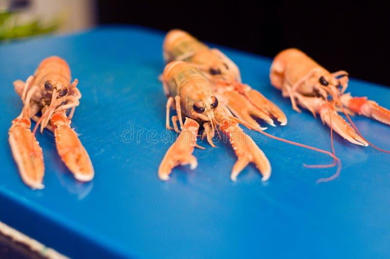 Download Langoustine stock image. Image of kitchen, lobster, ingredients - 26813551