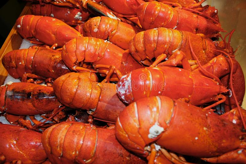Download Langoustine photo stock. Image du poissons, glace, shell - 45364204