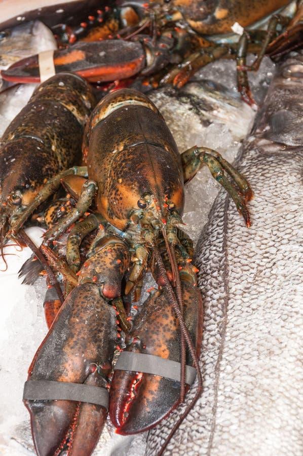 Langoustine au marché de poissons de Malaga photos libres de droits