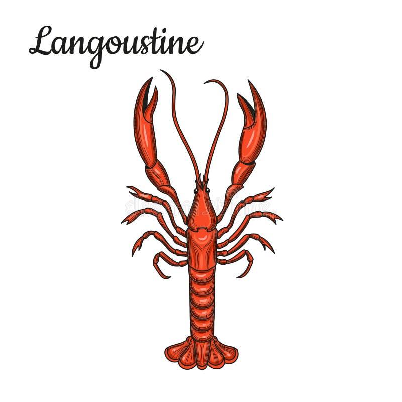 Langoustine crostacei Frutti di mare illustrazione di stock