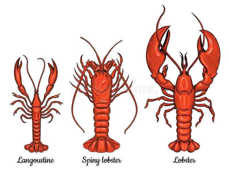 Langoustine, langosta espinosa, langosta Mariscos ilustración del vector