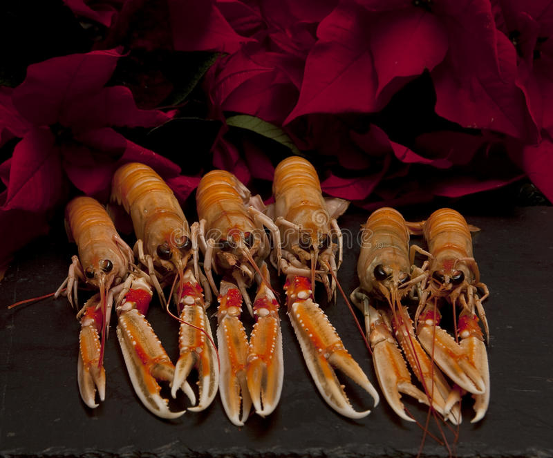 Download Langoustines Para El Almuerzo Imagen de archivo - Imagen de crustáceos, seises: 64200319