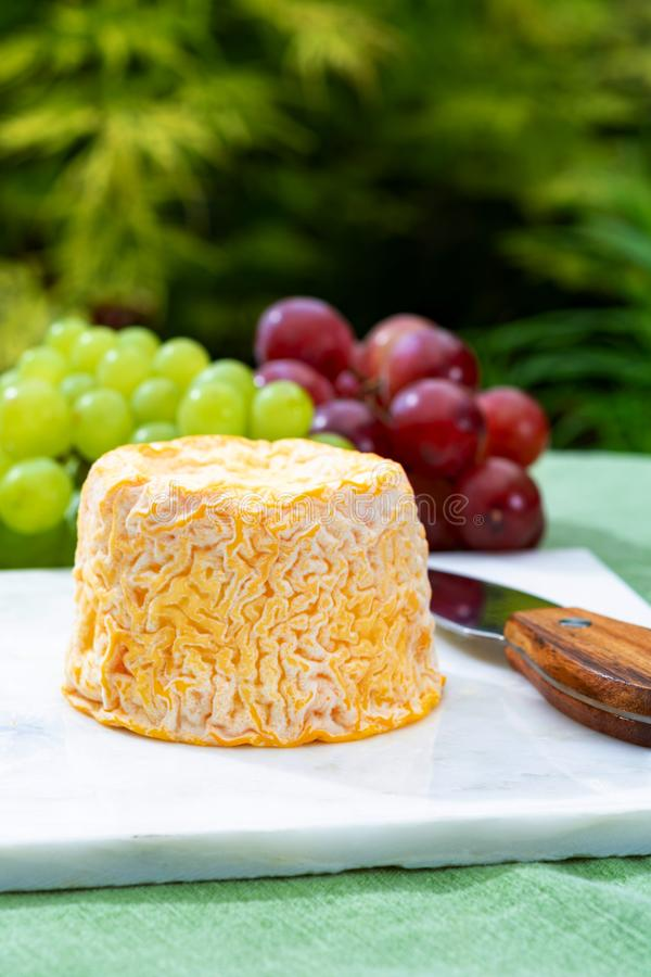Langres, French cow milk soft cheese, creamy and crumbly with white rind. French cheeses collection stock images