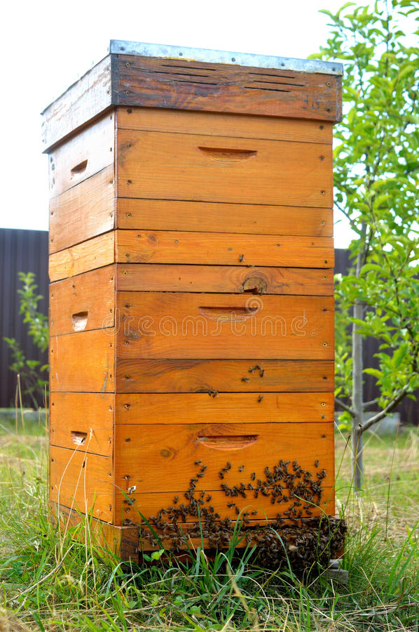 Langstroth beehive stock photo