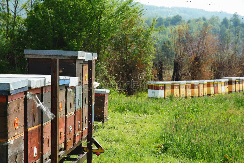 Langstroth hives set on an iron platform. Selective focus. stock photography