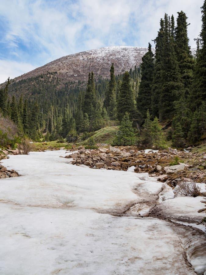 Langue de glacier dans une vallée de montagne couverte de pins photos stock