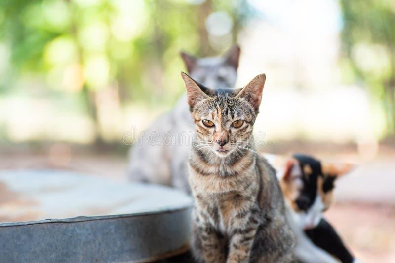 Langue mignonne de bâton de chat tigré  images libres de droits