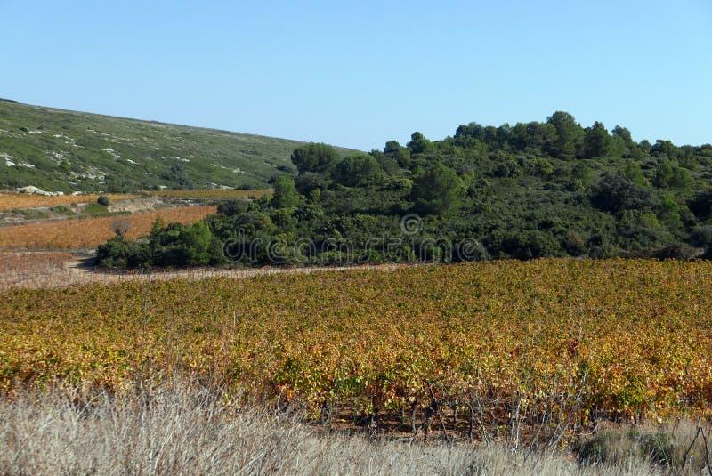 Languedoc winnicy w jesieni fotografia stock