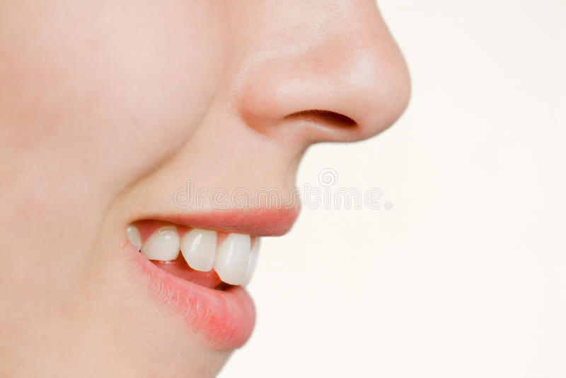 Languettes photo stock