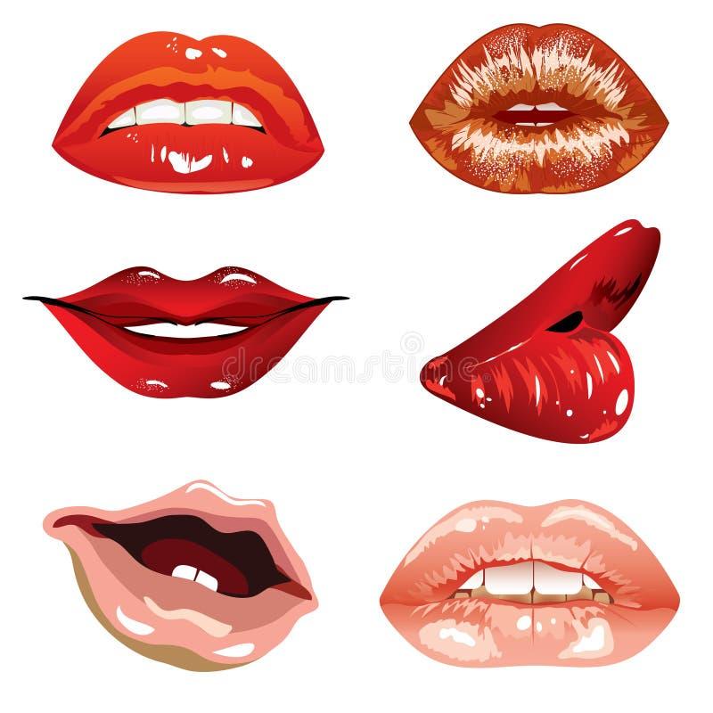 Languettes femelles illustration libre de droits