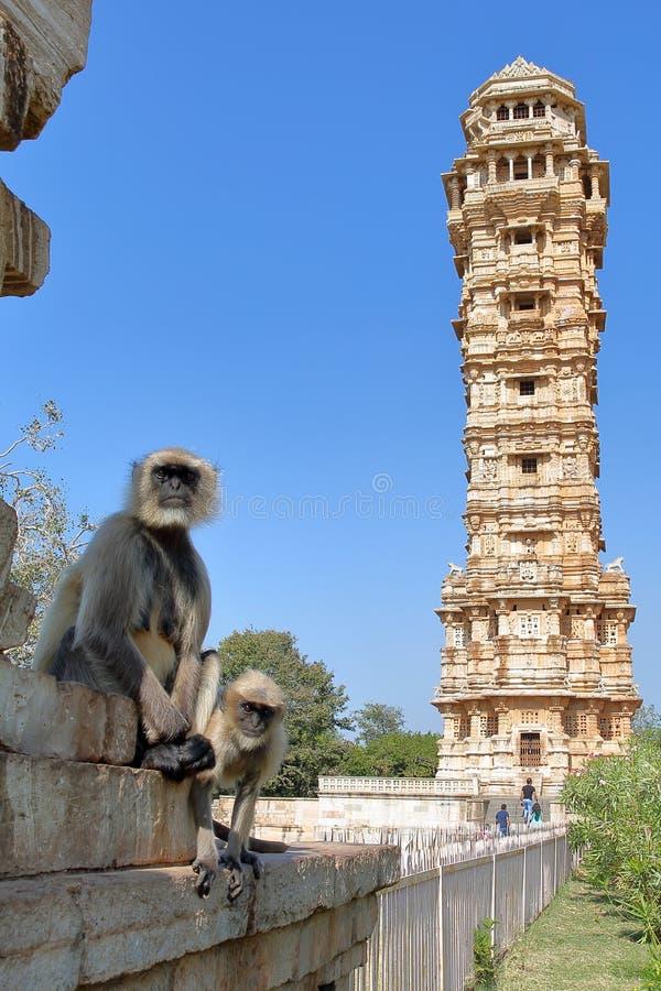 Langur обезьян серый представляя при башня победы на заднем плане, расположенная внутри форта Garh Chittorgarh, Раджастхан стоковое фото