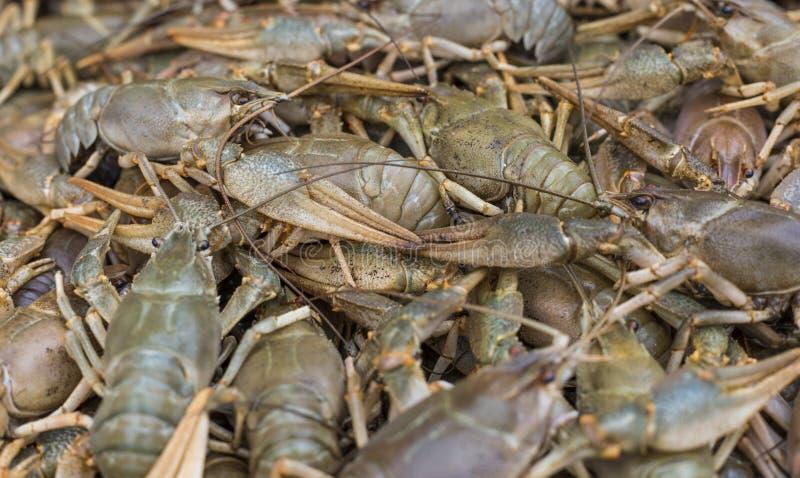 Languster cancer Lagade mat krabbor för mat arkivfoton