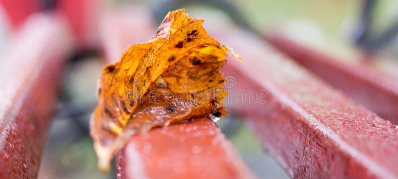 Langzaam verdwenen oranje blad op een natte bank in fall_ royalty-vrije stock afbeeldingen
