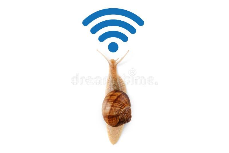 Langzame WiFi-verbinding, het concept snelheid in de moderne die de gegevensoverdracht van netwerkinternet, looppasslak op witte  stock afbeelding