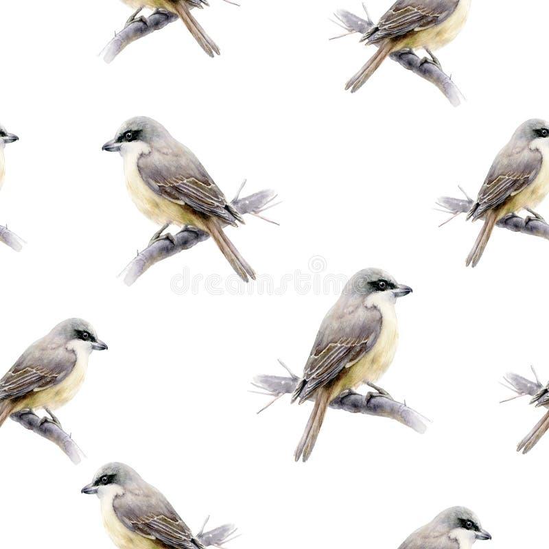 Lanius bird hand drawn watercolor illustration. Seamless pattern. vector illustration