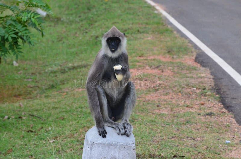 Lanka1 stockfotografie