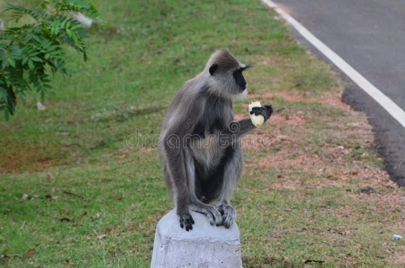 Lanka3 lizenzfreie stockfotografie