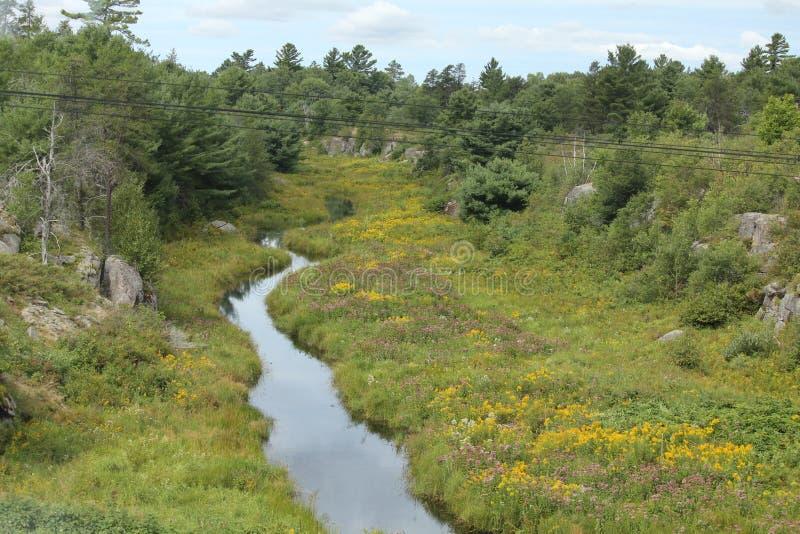 Lanscape河通过有野花的森林 免版税图库摄影