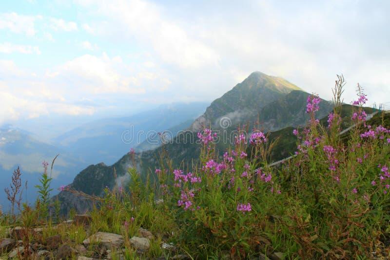 Lanscape con las flores salvajes hermosas, skyin azul de la montaña el d3ia foto de archivo