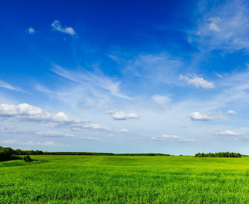 Lanscape de paysage de champ de vert d'été de ressort photographie stock libre de droits
