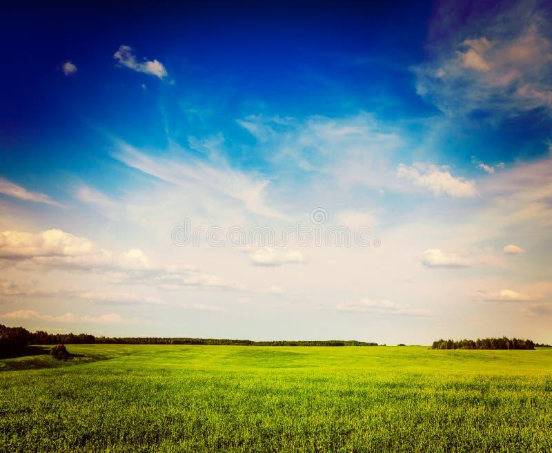 Lanscape de paysage de champ de vert d'été de ressort image libre de droits
