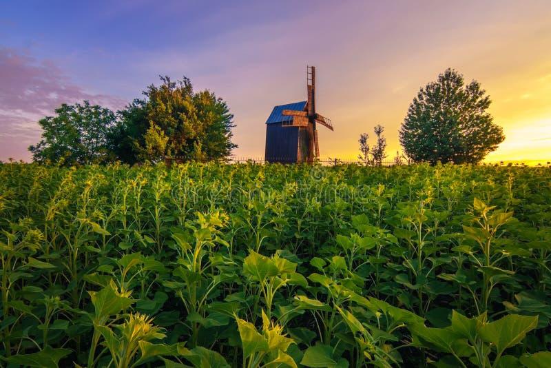 Lanscape del verano con el molino de viento viejo en el amanecer fotos de archivo libres de regalías