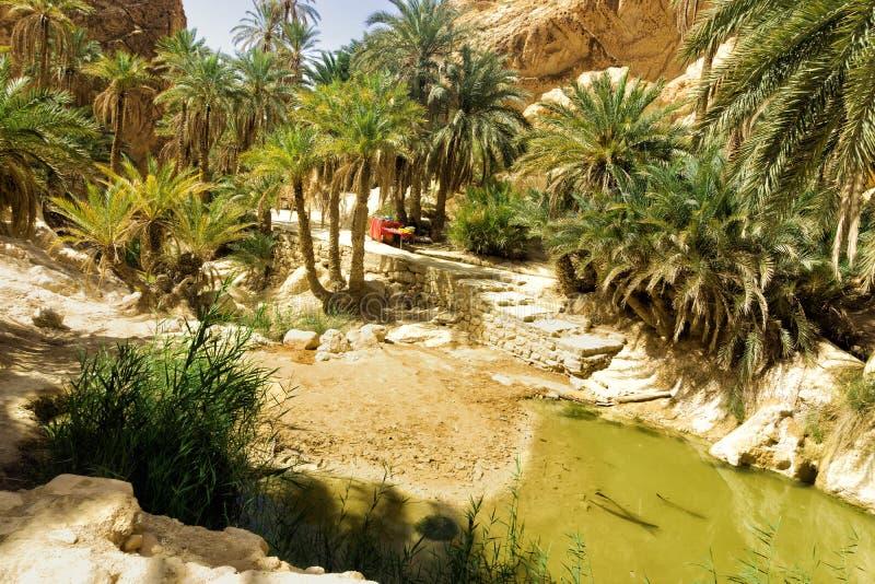 Lanscape dell'oasi di Chebika, Tunisia immagini stock
