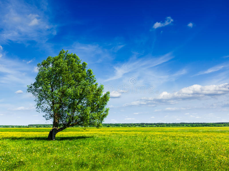Lanscape för landskap för fält för vårsommargräsplan med det enkla trädet royaltyfri bild
