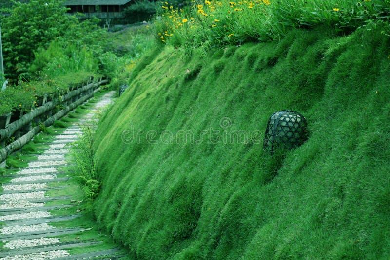 Lanscape piękna zielona trawa od sposobu parka w ogródzie od Bandung zdjęcia royalty free
