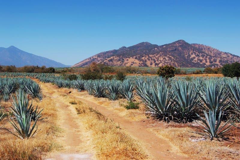 Lanscape tequila Mexico zdjęcie royalty free
