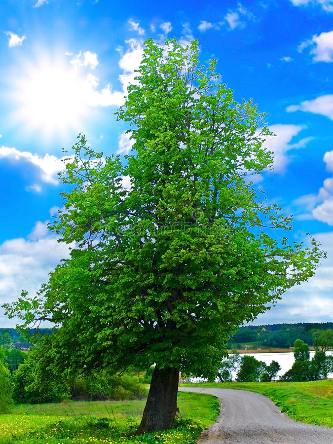 Download Lanscape with tree stock photo. Image of perfection, beautiful - 9605566