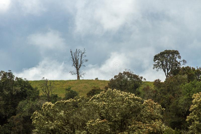 Lanscape vert et ciel photographie stock