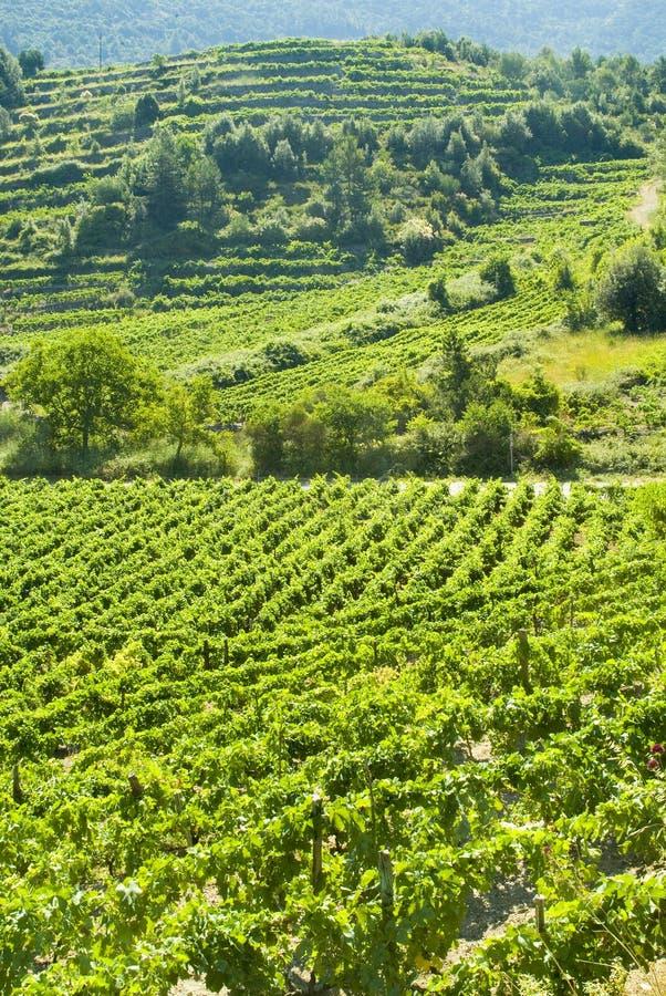 lanscape winnica zdjęcie stock