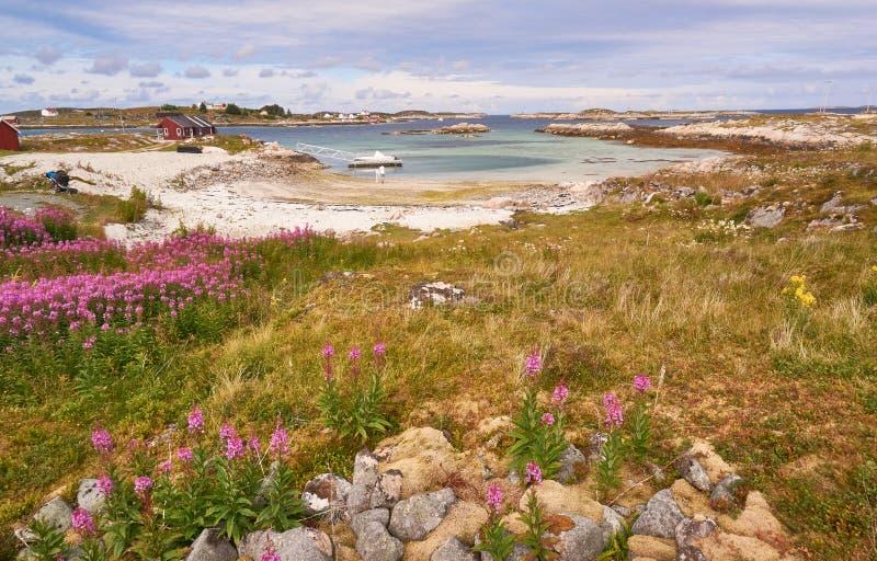 Lanscapes de los fiordos noruegos en el verano fotos de archivo