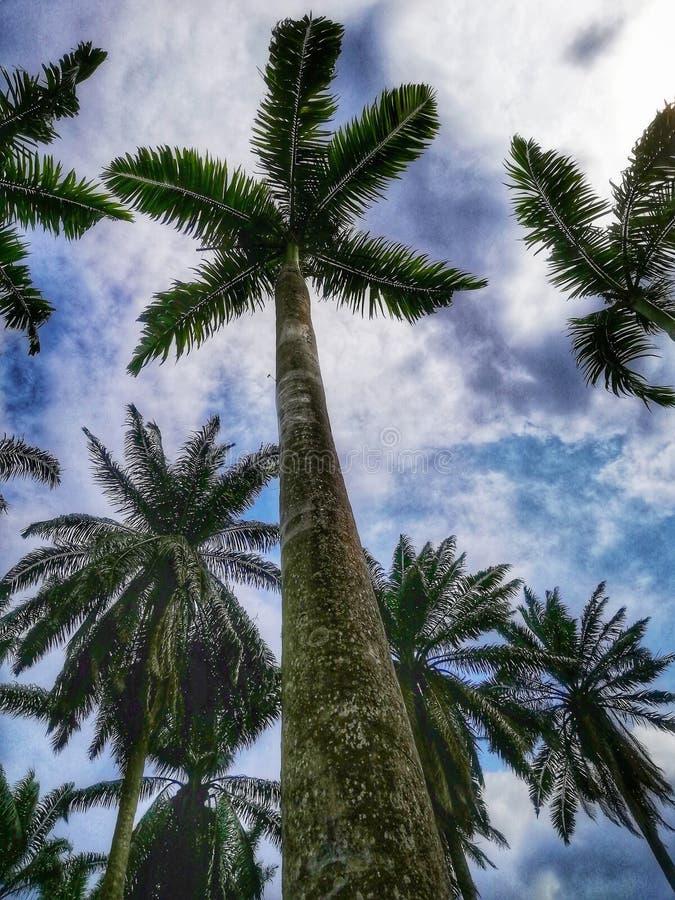 Lanscapesikten av palmträd på botaniska trädgården royaltyfria bilder